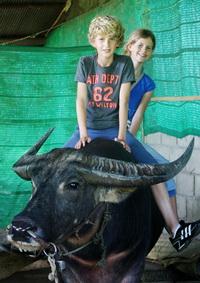 Buffalo riding_bert_200_283