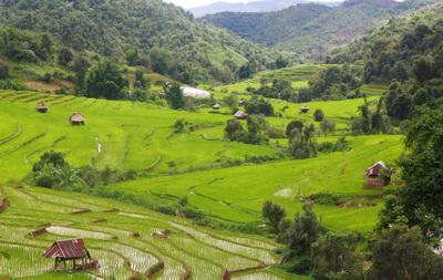 Rice terraces_bert_edit_400_253