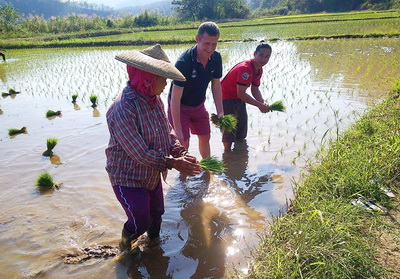 Rice farming Thailand