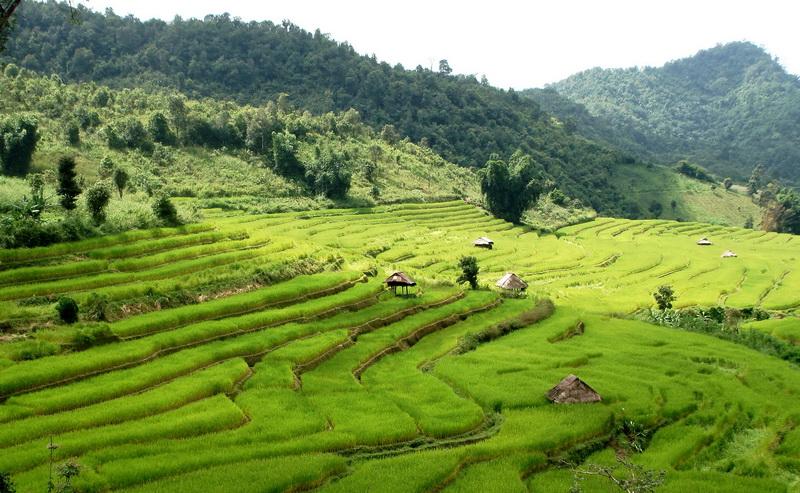 Rice terraces Mae Hong Son
