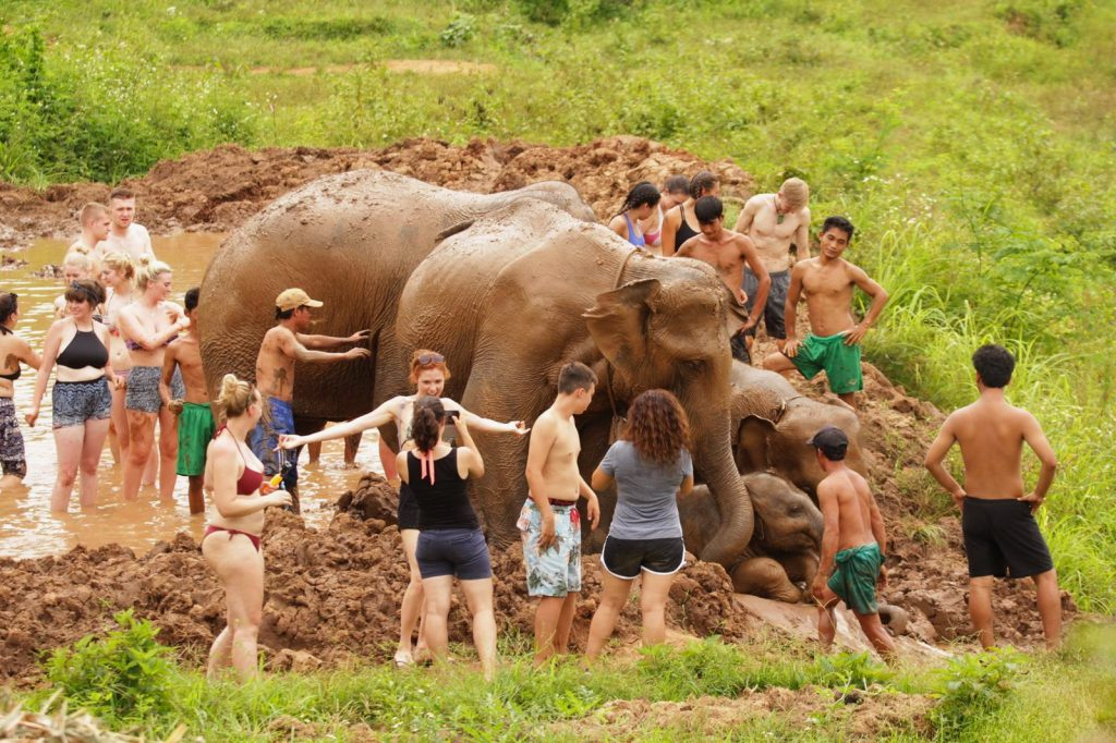 Best Elephant Camps in Chiang Mai - Northern Thailand Tours