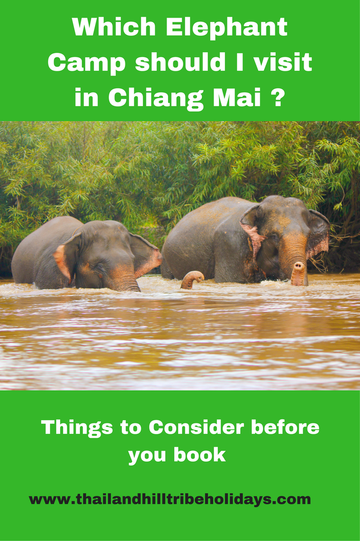 Which Elephant Camp Chiang Mai ?