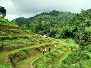 Walking through rice terraces